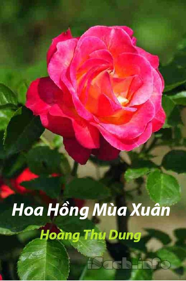 Hoa Hồng Mùa Xuân